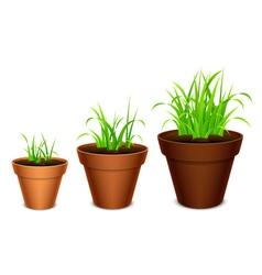 Growing grass vector image