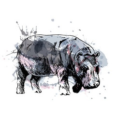 Colored hand drawing of a hippopotamus vector