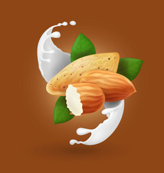 Milk splash with almond nut realistic vector