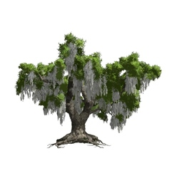 Oak tree isolated vector image