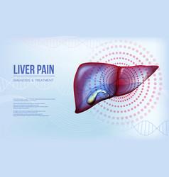 Realistic liver and gallbladder baner concept vector
