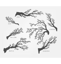 Set of branches twigs of different trees vector