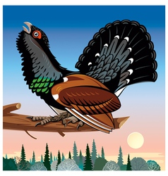 Wood grouse vector
