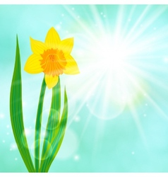 Spring card background with daffodil and sun vector image vector image