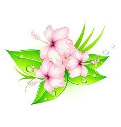 summer hibiscus vector image vector image