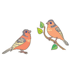 two finch vector image