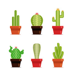 decorative cactus set with prickles on white vector image