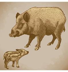 Engraving boar retro vector