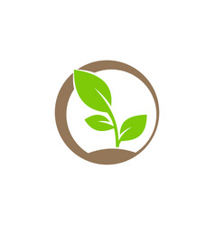plant ecology bio logo vector image