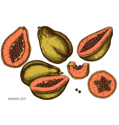 set hand drawn colored papaya vector image