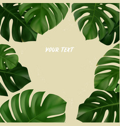 summer tropical background monstera leaves vector image