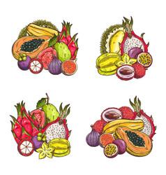 tropical exotic fruits set sketch vector image