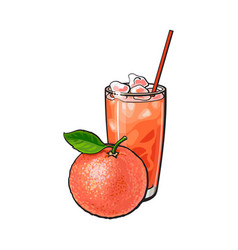 whole grapefruit and glass of freshly squeezed vector image