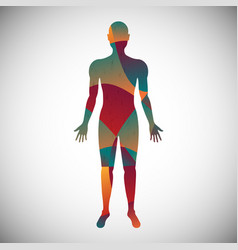 human body color abstract style vector image