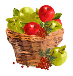 apples watercolor basket red vector image