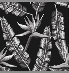 Black white bird paradise flowers banana vector