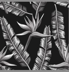 black white bird paradise flowers banana vector image