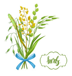 bouquet with herbs and cereal grass floral design vector image
