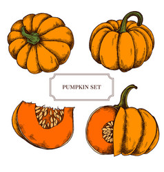 Collection of hand drawn pumkins highly vector