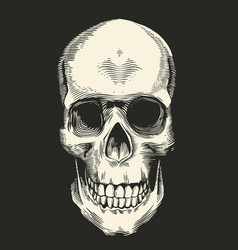 Human skull drawn in retro etching style isolated vector