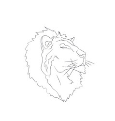 lion portrait lines vector image