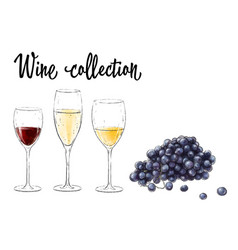 three glasses of wine and grape cluster isolated vector image
