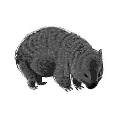 Australian animal wombat in doodle style vector