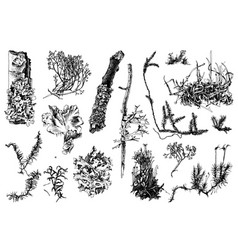 Hand drawn mosses and lichens vector