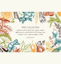 Hand drawn spices and herbs design vector