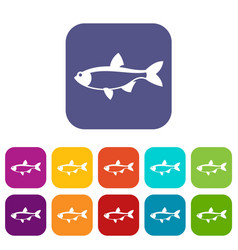 Rudd fish icons set vector