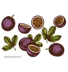 set hand drawn colored passion fruit vector image