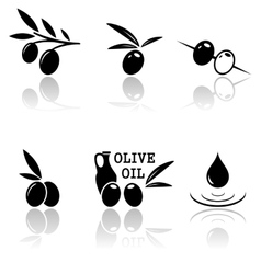 set olive icons vector image
