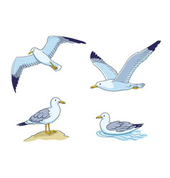 seagulls - flying sitting and swimming vector image