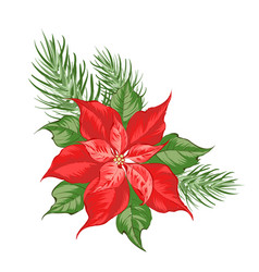 composition red poinsettia flower isolated over vector image