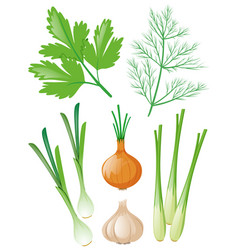 Different types of vegetables on white vector