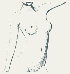naked young woman sketch vector image