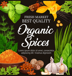 Natural herbs organic seasoning spices vector