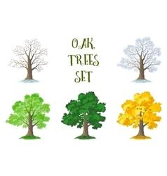 Oak Trees Set Seasons vector image