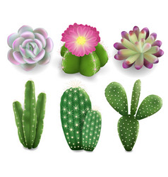 cactus and succulent plants set isolated vector image