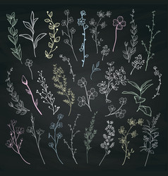 Chalk drawing herbs plants and flowers vector
