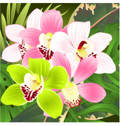 Orchids cymbidium tropical flowers pink white vector