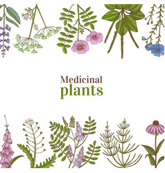 template with medicinal plants in hand-drawn style vector image