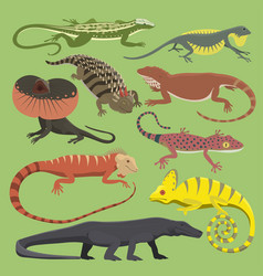 reptyle lizard reptile isolated vector image