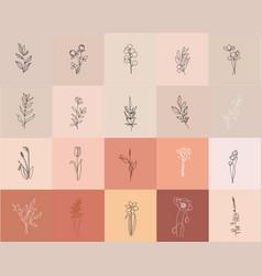 continuous line drawing set plants black vector image