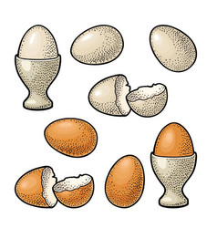 egg and broken shell vintage color engraving vector image