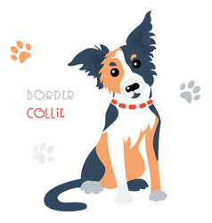 Funny border collie tricoloured dog sitting vector