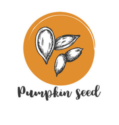 Pumpkin seed vintage hand drawing of seeds vector