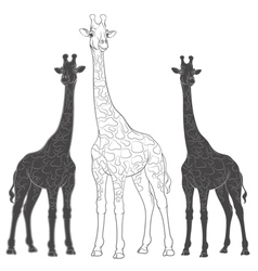 Set of with giraffes vector