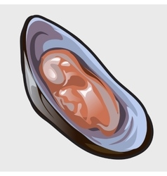 Open delicious oyster icon for design needs vector image