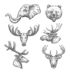 animal sketch set african and forest mammal vector image